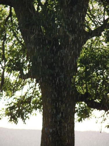 2008 08 15 Une averse de pluie