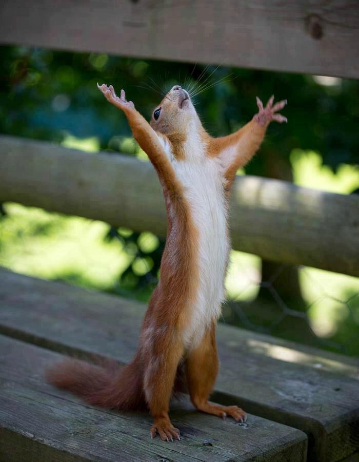 ecureuil predicateur