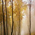 arbre automne1rx5m8ro3_1280