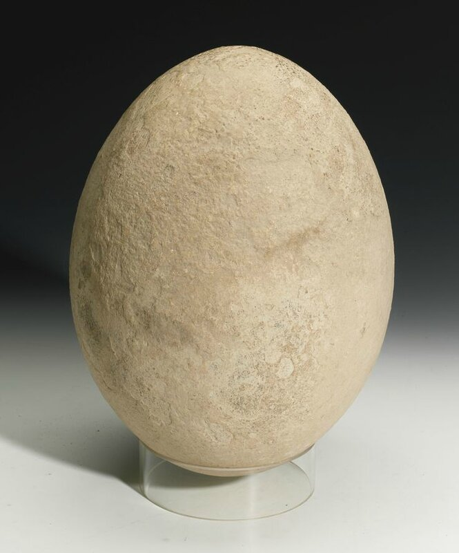 Sotheby's to offer extremely rare elephant bird egg expected to fetch £30,000-50,000 at auction