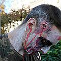 26-Zombie Day_1372