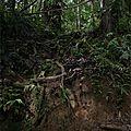 Bibidor de la jungle !