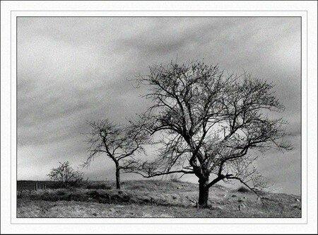 retouche_arbre_n_b_cadre