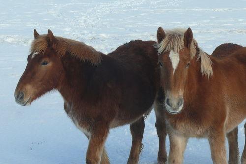 2008 12 30 Deux chevaux