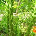 Plante grâce dans le jardin de notre pension