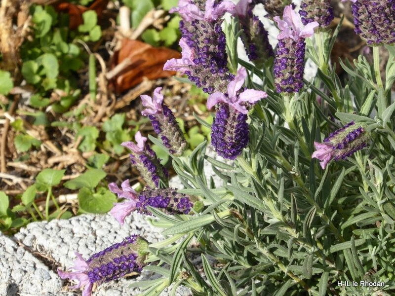 Avril Plantations (5)