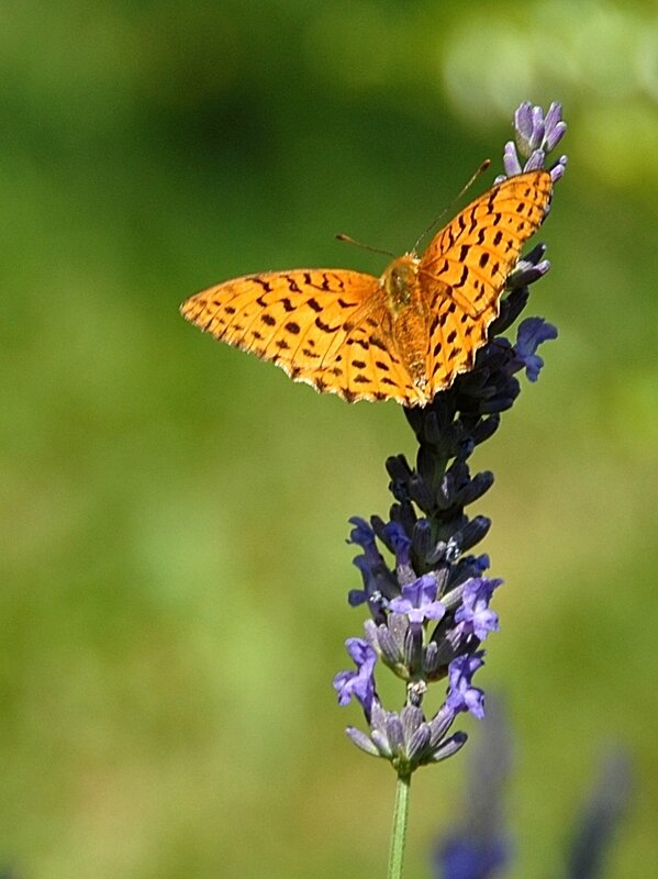 Papillons 1 19-09-17
