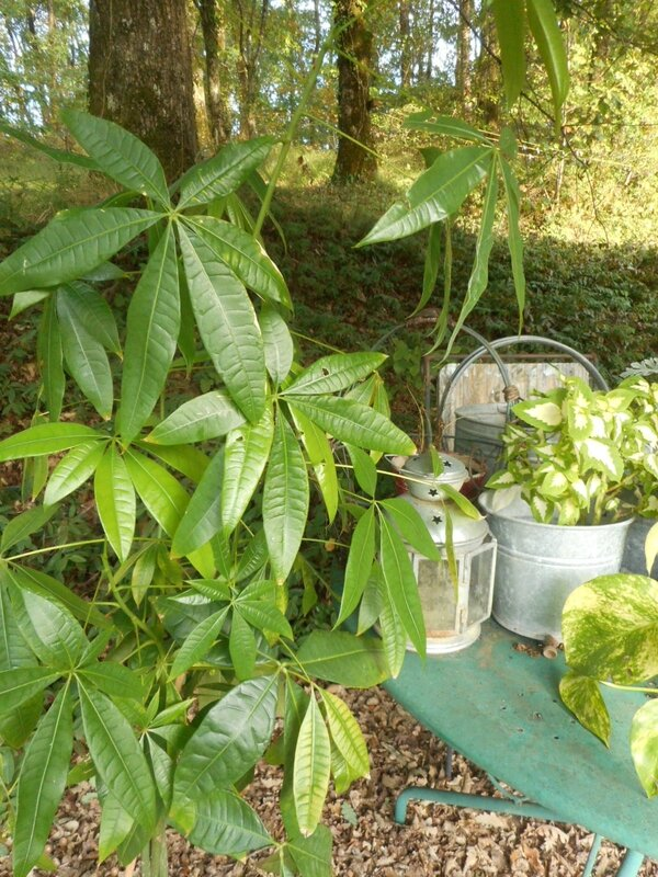 plantes vertes jardin (7)