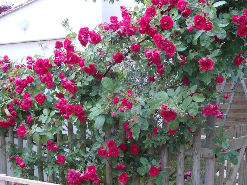 mon jardin 002