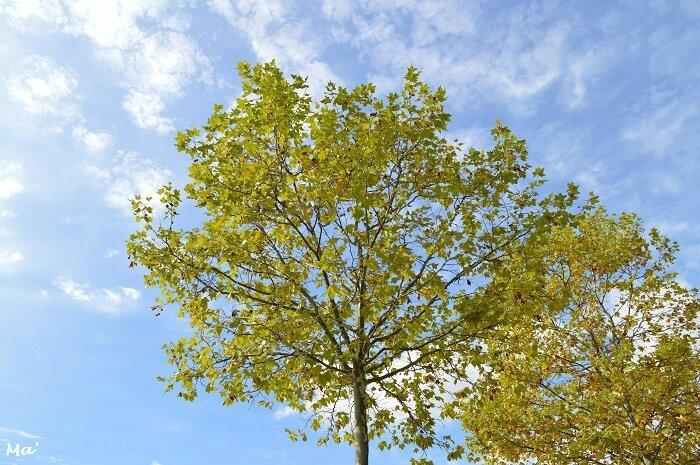 171001_feuilles_automne_2