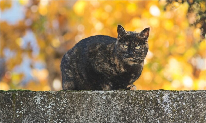 chat automne 141116