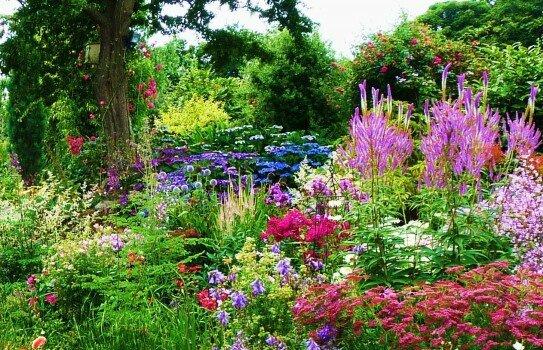 Breathtaking Zen Rock Garden