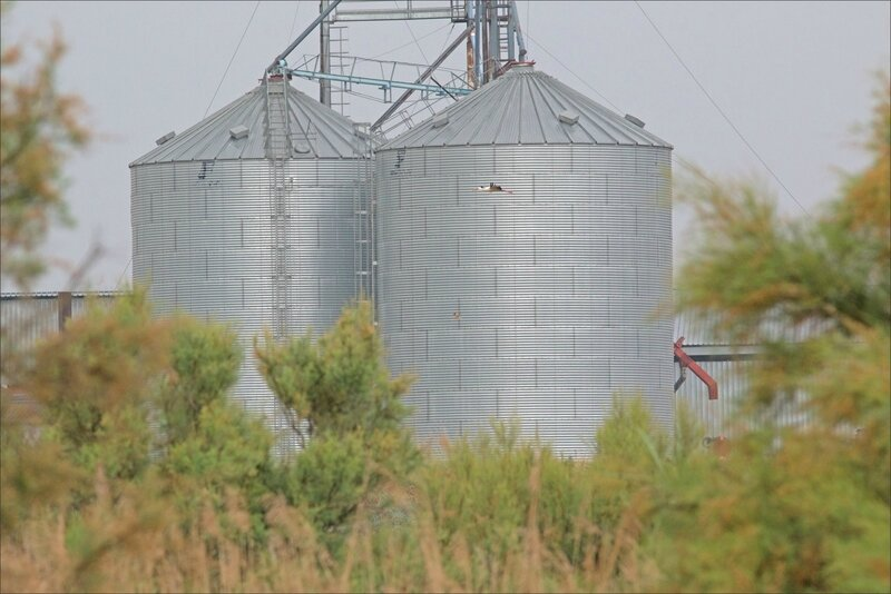 Haut Aragon juin 2017 J3 lagune Saranina 18 cigogne silos