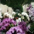 Vue d'ensemble de la serre aux orchidées