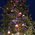 Strasbourg : le plus grand sapin d'Europe !