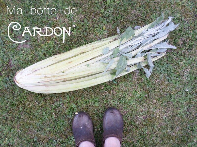 cardon-botte