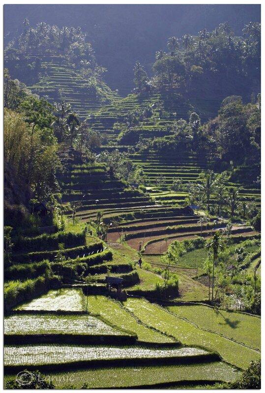 Bali_rizieres_terrasse_1