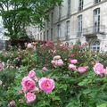 La Roseraie de l'Evêché de Blois