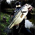 Bass Micro jig + Tp Planante