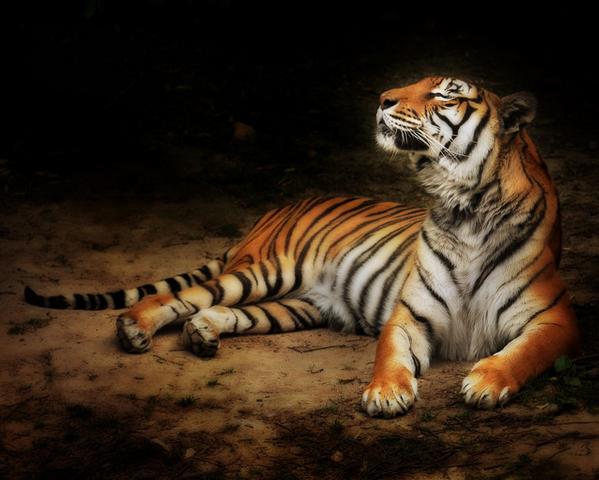 animaux 78