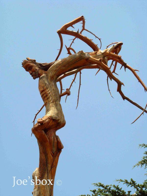 Plus qu 39 un arbre c 39 est un symbole et une oeuvre d 39 art le c dre du liban - Cedre bleu du liban ...