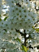 Blog 15-04-14 5