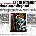 branleur d'éléphant