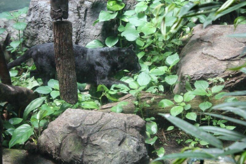 J11 - 08 juillet 2014 - zoo du Bronx (132).JPG