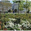 Parc de Billancourt 15