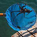 Carnets italiens trempés dans l'eau salée (2)