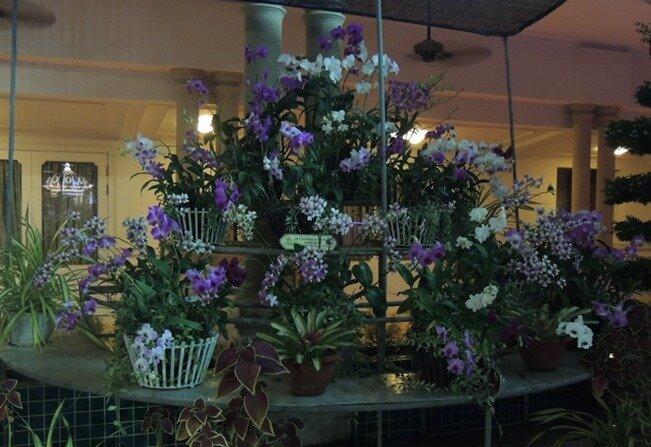 4-orchidées