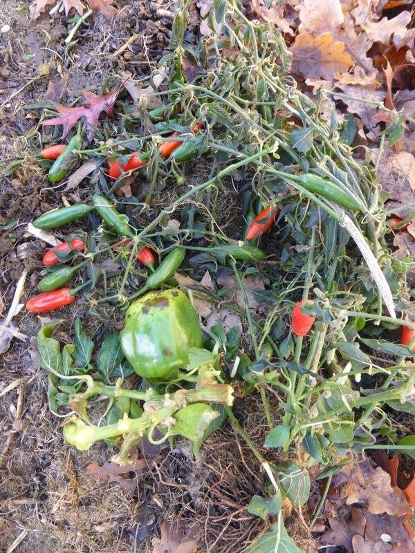 9-abri tomates (15)
