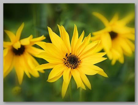 Jolies_fleurs