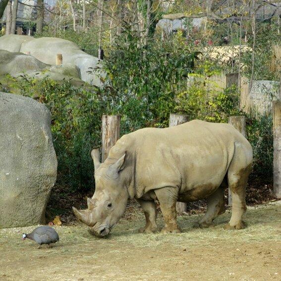 zoo d