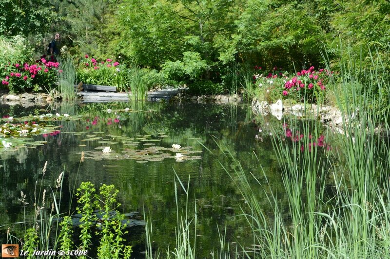 PAT_0177 Jardin chinois