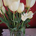 Magnifiques tulipes d'un blanc jaune