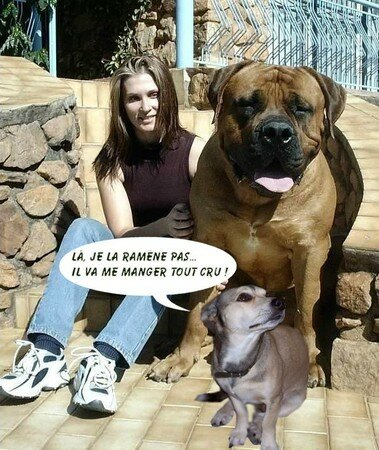 big_dog_tombulle