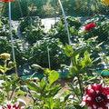 jardins ouvriers 012