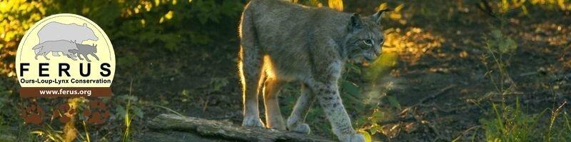 Loup, Lynx, Ours,... : les dernières de Férus.