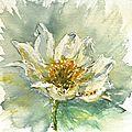 9 fleurs blanches