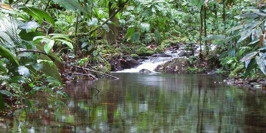 GUADELOUPE - Ruisseau près du Grand Etang - cliché Jérôme Wojciechwoski - source : lemonde.fr