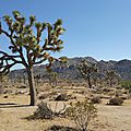 Road trip usa #2 - joshua tree np