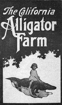california_alligator_farm