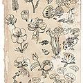 Recherches botaniques-2