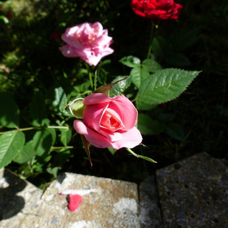 ma maison mon jardin le 11 septembre 2016 (2)