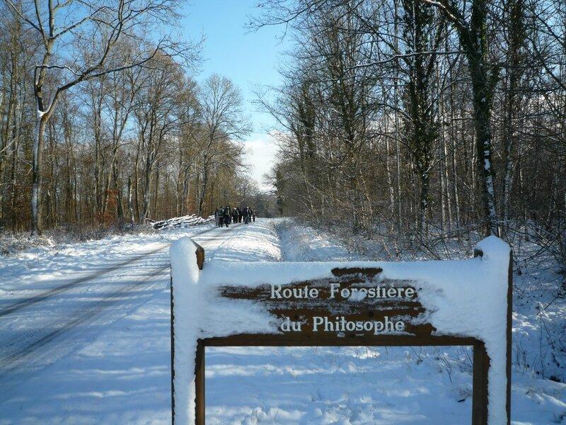 sur la route forestière du Philosophe