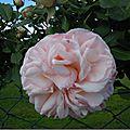 WindowsLiveWriter/Majolieroulotte_126E1/jardin mai 2015 020_thumb