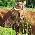 Vache et son veau Var 800x600