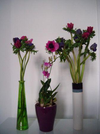 fleurs_coloroth_rapie