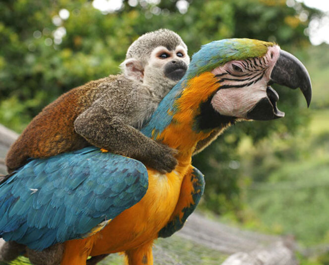 monkey_parrot_1743_3218284k
